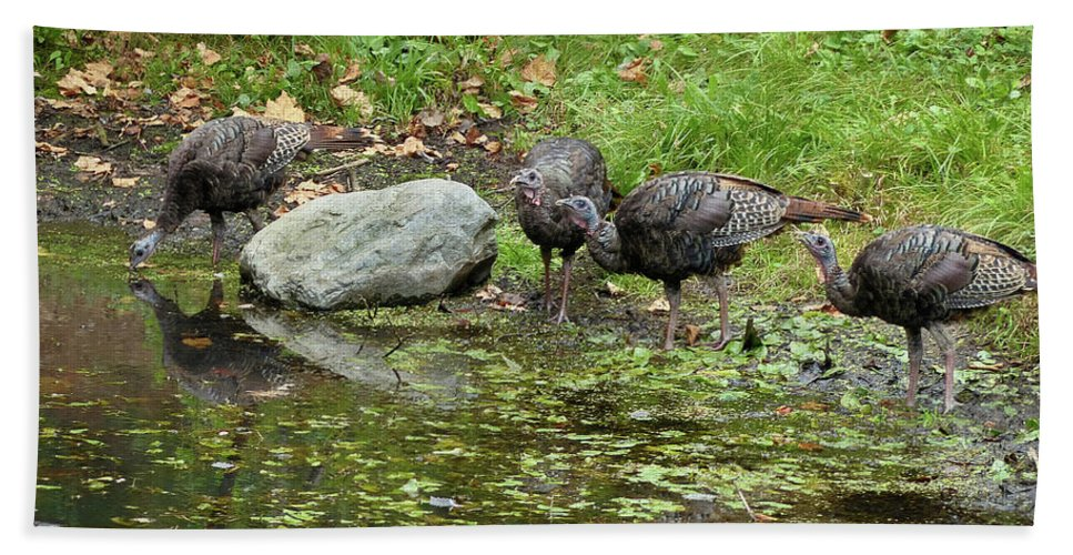 American Wild Turkey Beach Towel featuring the photograph The Watering Hole by Teresa A and Preston S Cole Photography