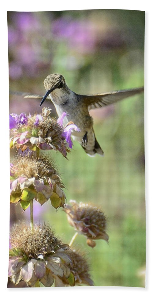Hummingbird Beach Towel featuring the photograph The Wonder Of Wings by Saija Lehtonen