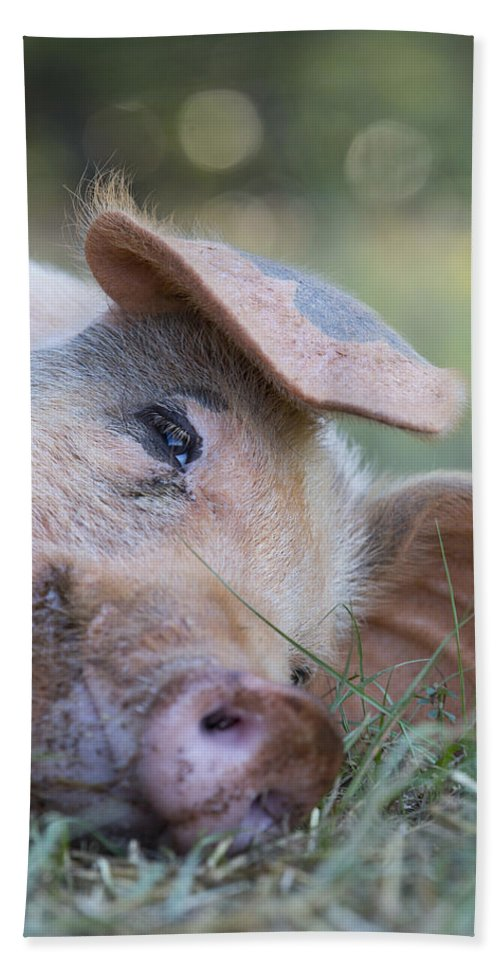 Hog Beach Towel featuring the photograph Thelma Lou by Keith May