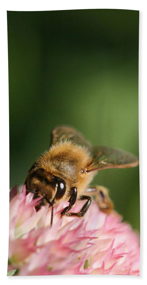 Bee Beach Towel featuring the photograph Thirsty For Nectar by Angela Rath