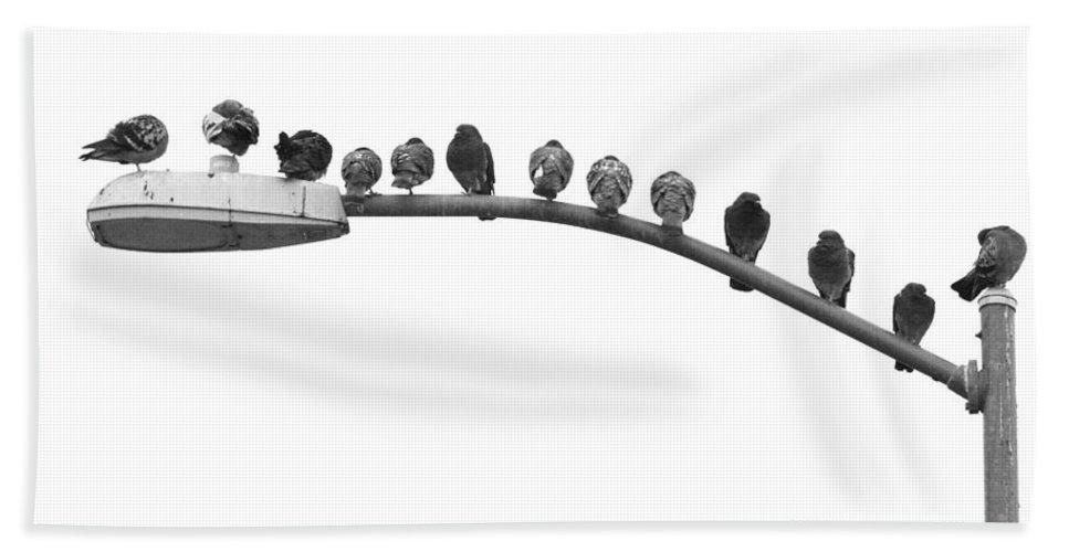 Birds Beach Towel featuring the photograph Thirteen Birds by James BO Insogna