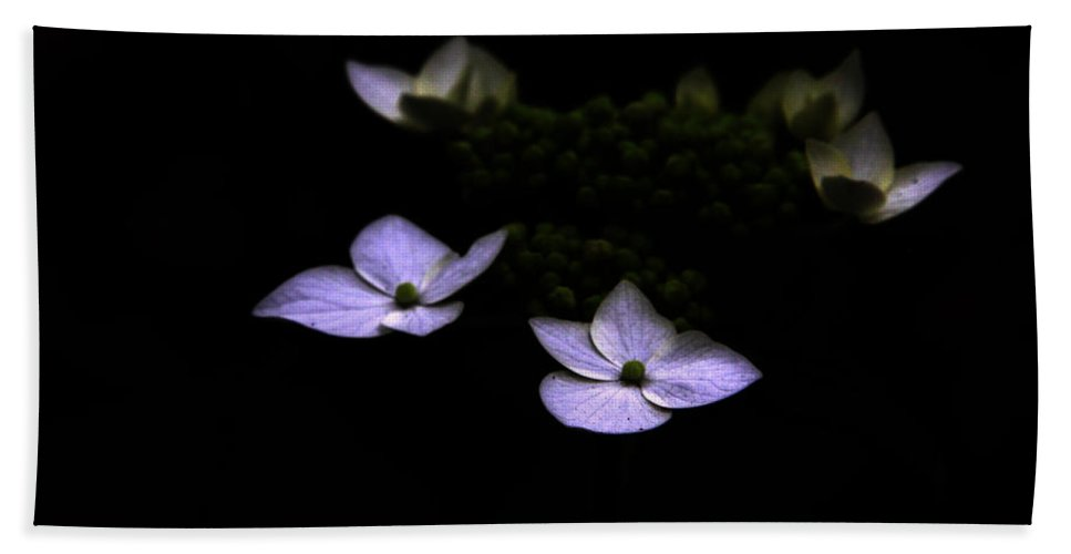 Hydrangea Beach Towel featuring the photograph This Little Light Of Mine by Amanda Barcon