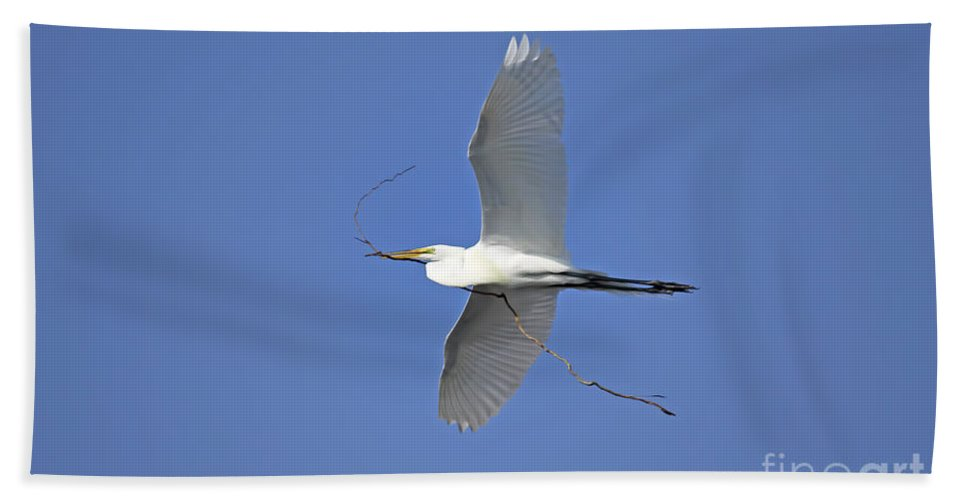 Giant Egret Beach Towel featuring the photograph This Might Work by Deborah Benoit