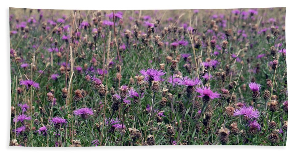 Pink Beach Towel featuring the photograph Thistle Storm by Laura Hologram