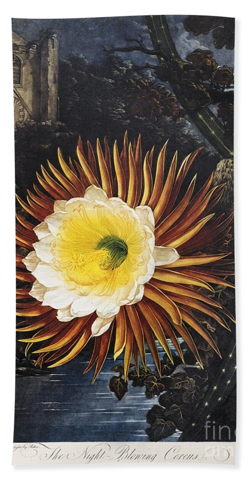 1800 Beach Towel featuring the photograph Thornton: Cereus by Granger