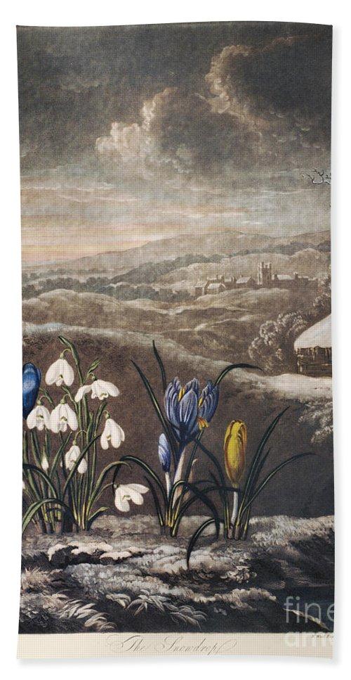 1799 Beach Towel featuring the photograph Thornton: Crocusi by Granger