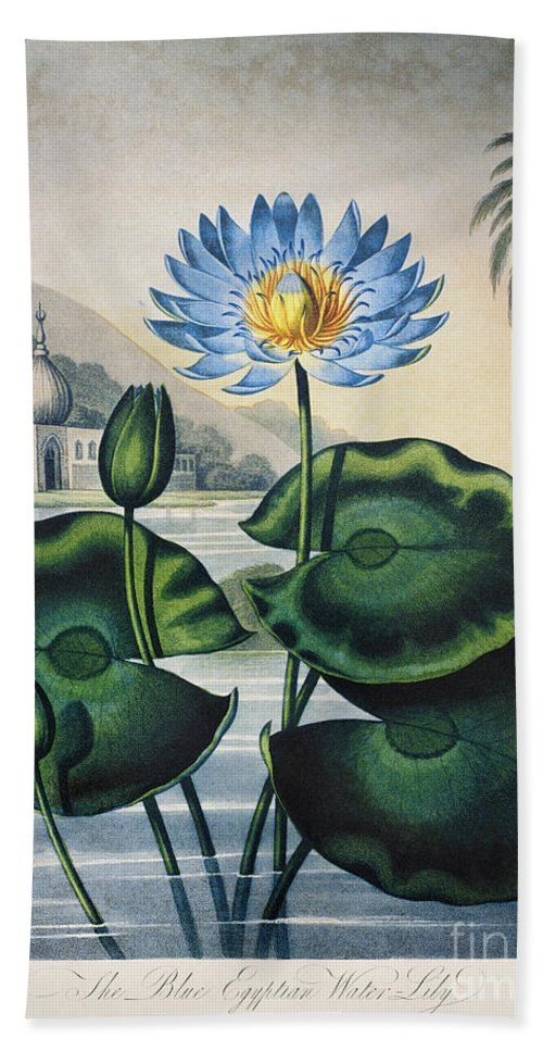 1804 Beach Towel featuring the photograph Thornton: Water Lily by Granger