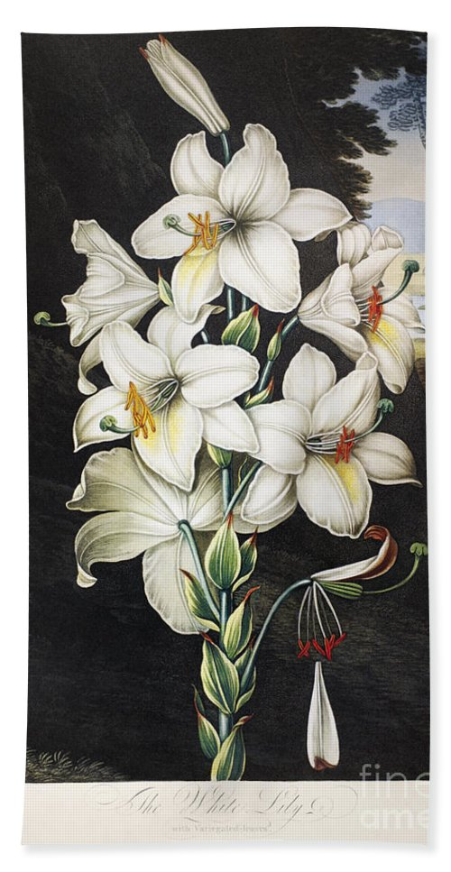 1800 Beach Towel featuring the photograph Thornton: White Lily by Granger