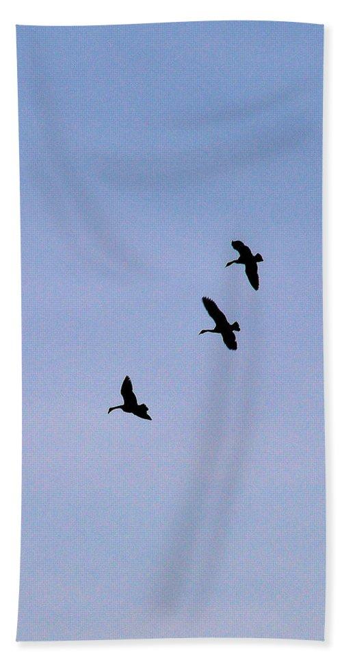 Bird Beach Towel featuring the photograph Three Amigos by Rich Bodane