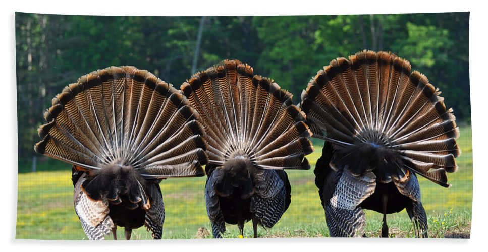 Turkey Beach Towel featuring the photograph Three Fans by Todd Hostetter