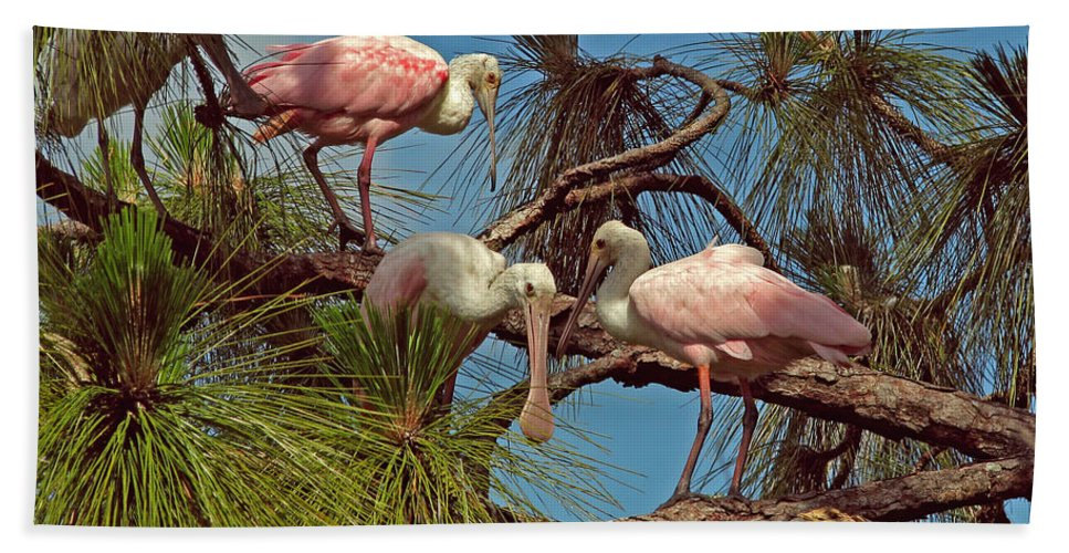 Nature Beach Towel featuring the photograph Three In A Tree by Peg Urban