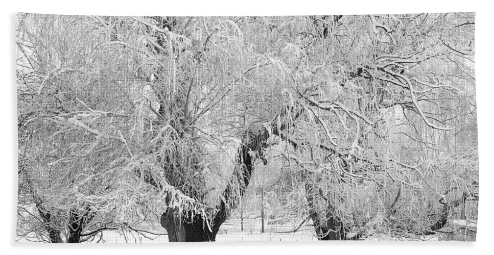 Black And White Beach Towel featuring the photograph Three Trees In The Snow - Bw Fine Art Photography Print by James BO Insogna