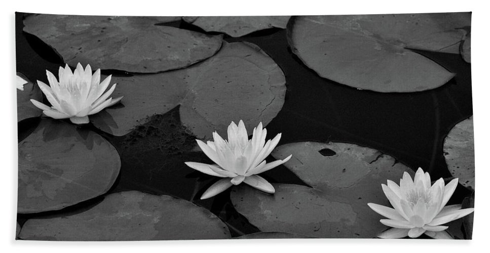 Water Lilies Beach Towel featuring the photograph Three Water Lilies by Krista Russell