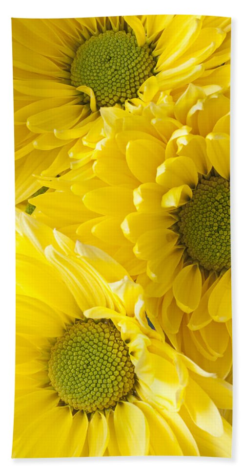 Three Yellow Daisies Mums Cremon Beach Towel featuring the photograph Three Yellow Daisies by Garry Gay