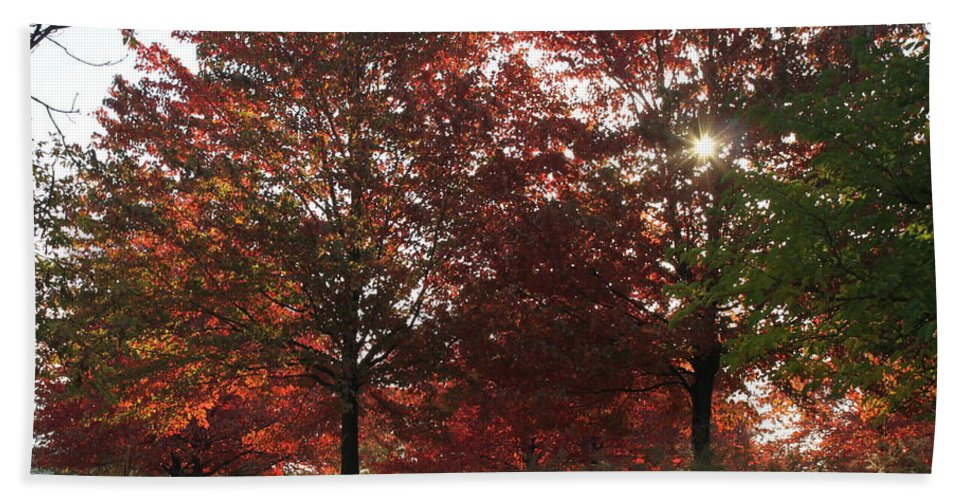 Fall Beach Towel featuring the photograph Through The Leaves by Lauri Novak