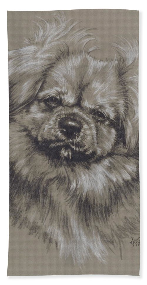 Purebred Beach Towel featuring the drawing Tibetan Spaniel by Barbara Keith