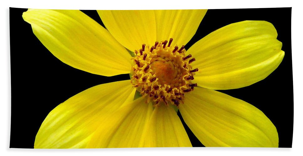 Tickseed Sunflower Beach Towel featuring the photograph Tickseed Sunflower by J M Farris Photography