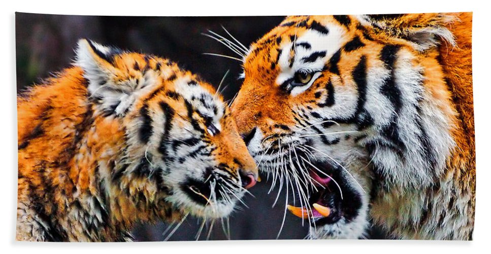 Animal Beach Towel featuring the photograph Tiger 05 by Ingrid Smith-Johnsen