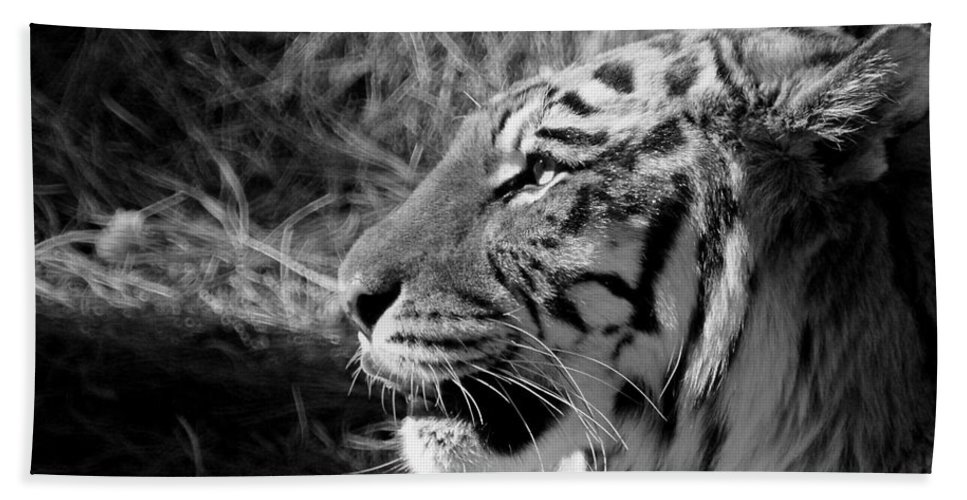 Tiger Beach Towel featuring the photograph Tiger 2 Bw by Ernie Echols