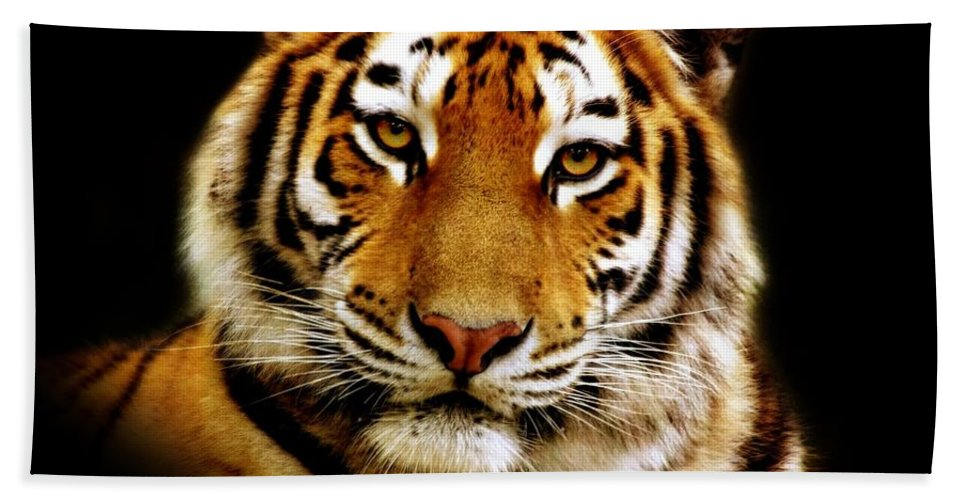 Wildlife Beach Towel featuring the photograph Tiger by Jacky Gerritsen