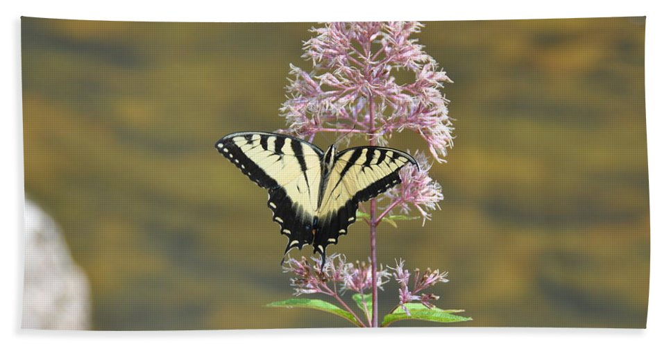 Butterfly Beach Towel featuring the photograph Tiger Swallowtail Butterfly On Common Milkweed 1 by Rich Bodane