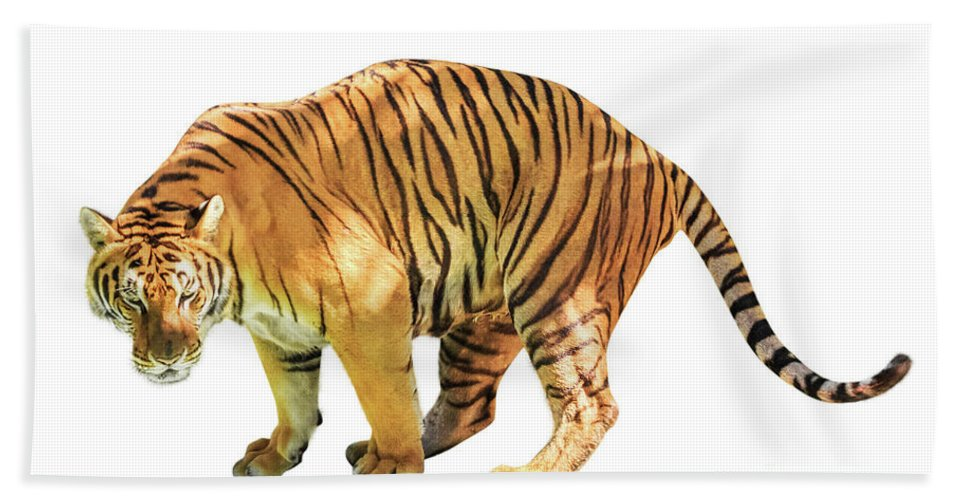 Tiger Beach Towel featuring the photograph Tiger White Background by Benny Marty