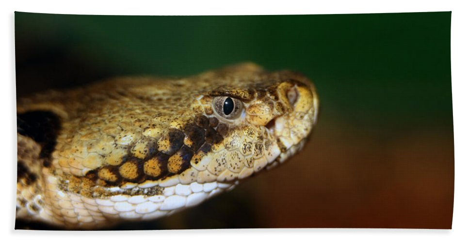 Animal Beach Towel featuring the photograph Timber Rattler Head On by Alan Look