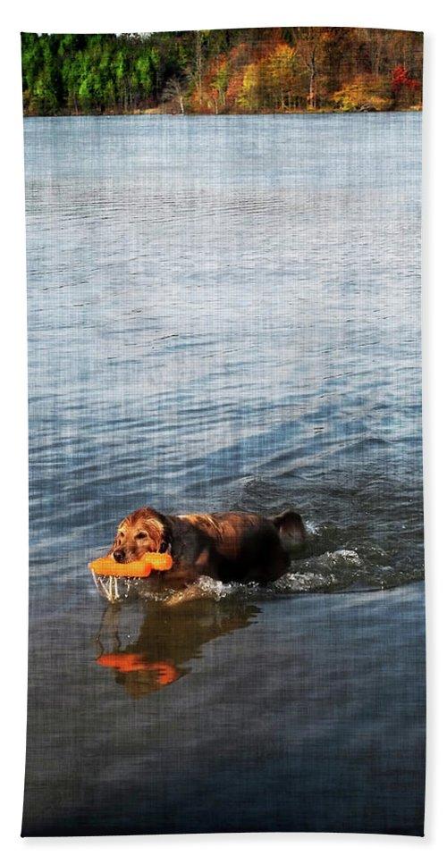 Dog Beach Towel featuring the digital art Time To Fetch by Joan Minchak