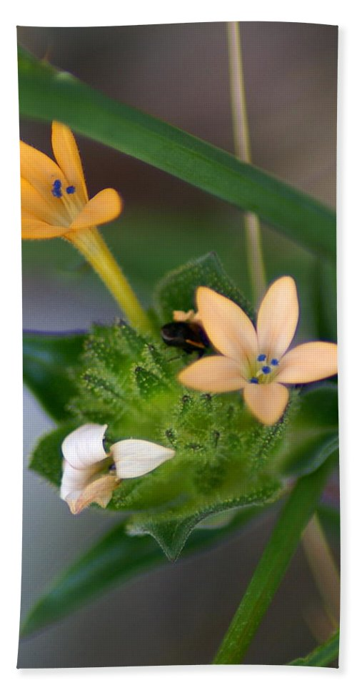 Flowers Beach Towel featuring the photograph Tiny Flowers by Ben Upham III