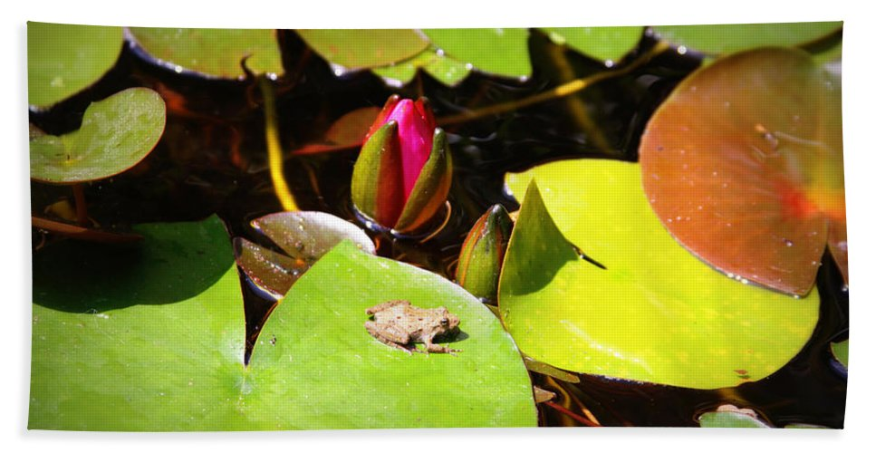 Frog Beach Towel featuring the photograph Tiny Frog by Tina Meador