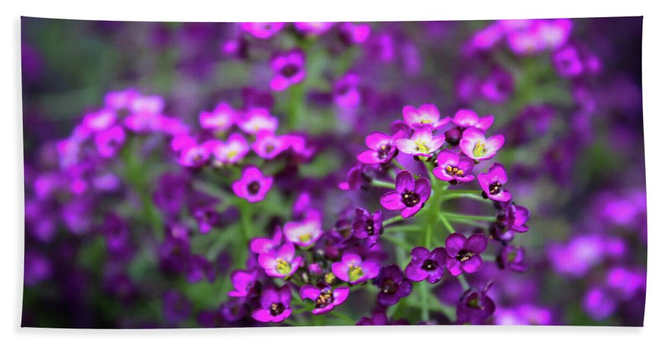 Jeanette Wygant Photography Beach Towel featuring the photograph Tiny Purple Flowers by Jeanette Wygant
