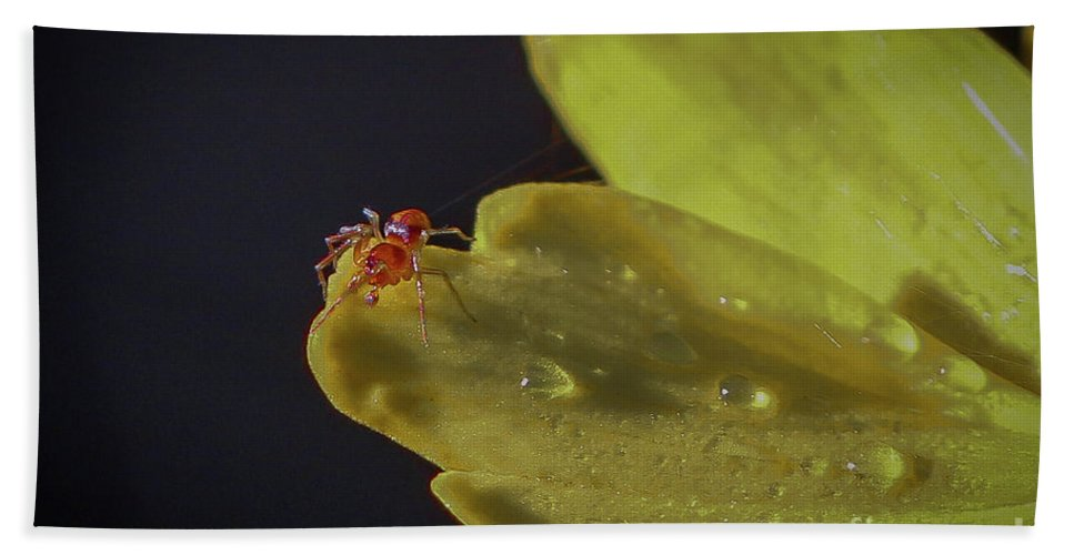 Spider Beach Towel featuring the photograph Tiny Spider On Petal by Tom Claud