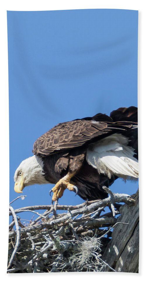 Eagle Beach Towel featuring the photograph Tip Toeing Across Nest by Tony Fruciano
