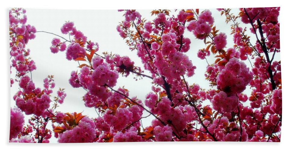 Cherry Blossom Beach Towel featuring the photograph Tis The Season by Deborah Crew-Johnson