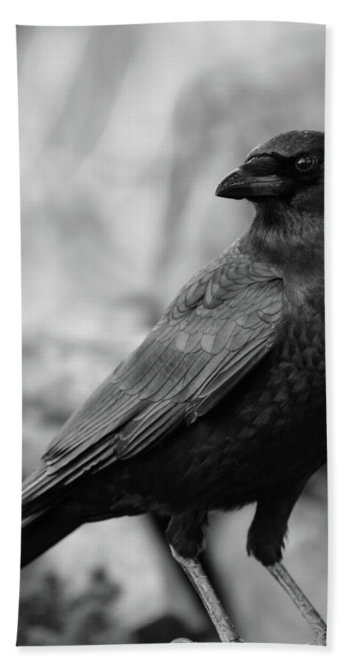 Crow - Rae Ann M. Garrett - Black And White Photography - Images Of Crows - Corvids- Mother Crow- For People Who Love Crows - Crow Lovers - International Known Artist - Professional Artists- Beach Towel featuring the photograph To Be Adored by Rae Ann M Garrett
