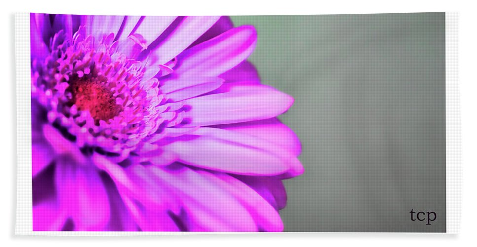 Purple Beach Towel featuring the photograph To The World by Traci Cottingham