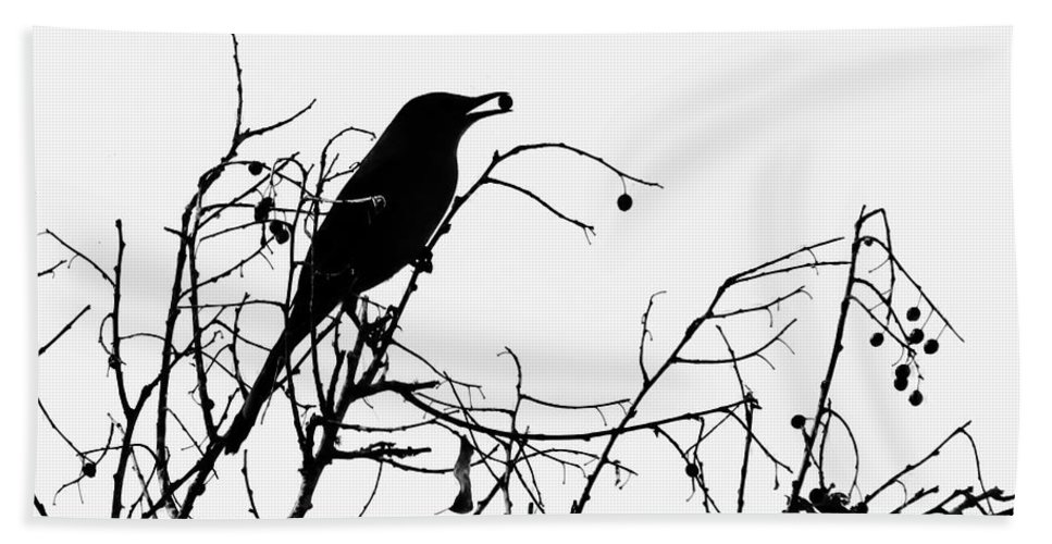 Nature Beach Towel featuring the photograph Top Bird by Peg Urban