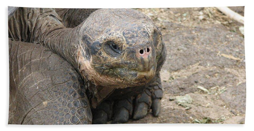 Tortoise Beach Towel featuring the photograph Tortoise by Sandra Bourret