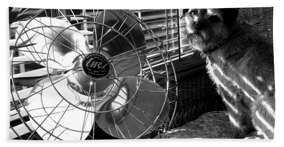 Electric Fan Beach Towel featuring the photograph Toto Checks In by Charles Stuart