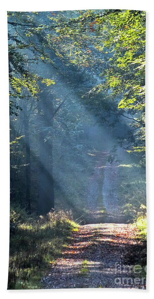 Landscape Beach Towel featuring the photograph Trail In Morning Light by Heiko Koehrer-Wagner