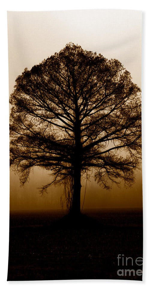 Trees Beach Sheet featuring the photograph Tree by Amanda Barcon