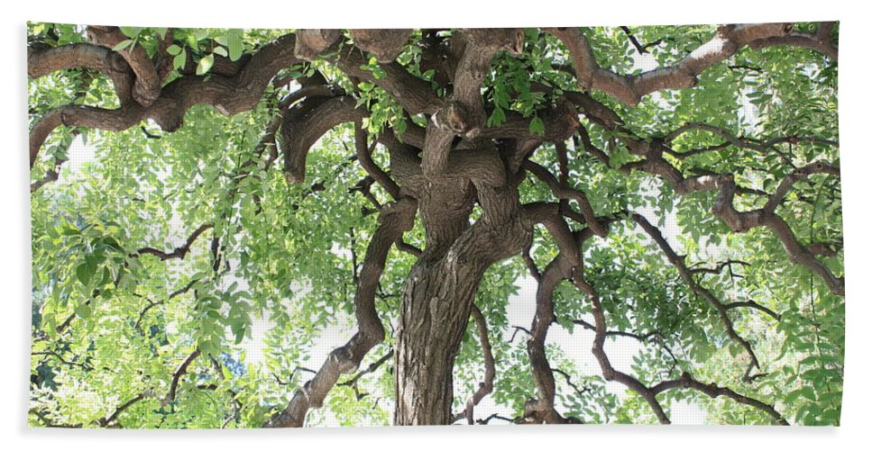 Tree Beach Towel featuring the photograph Tree At Ming Tombs by Carol Groenen