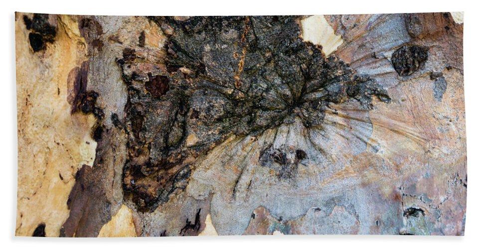Tree Bark Patterns Beach Sheet featuring the photograph Tree Barks Pattern #13 by Robert VanDerWal