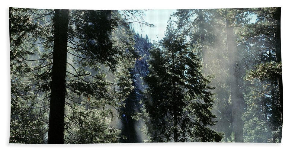 Trees Beach Towel featuring the photograph Tree Breath by Steve Williams