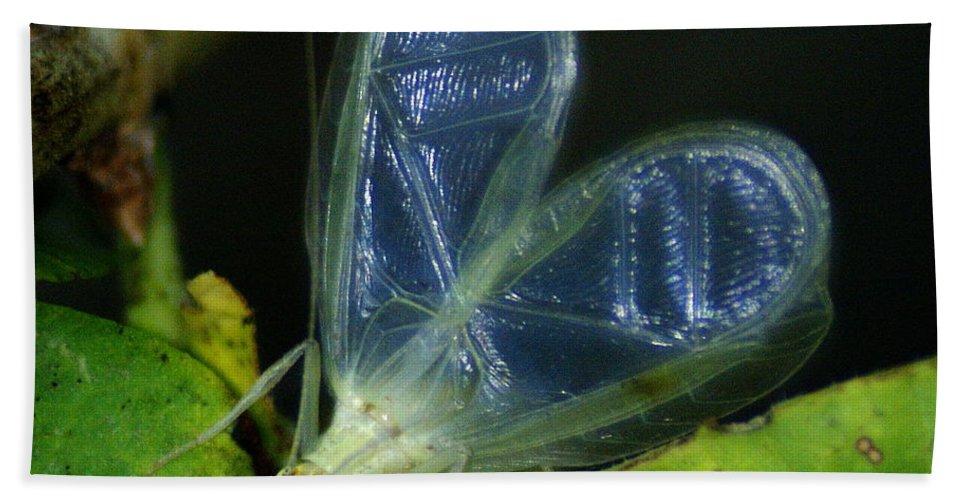 Spokane Beach Towel featuring the photograph Tree Cricket by Ben Upham III