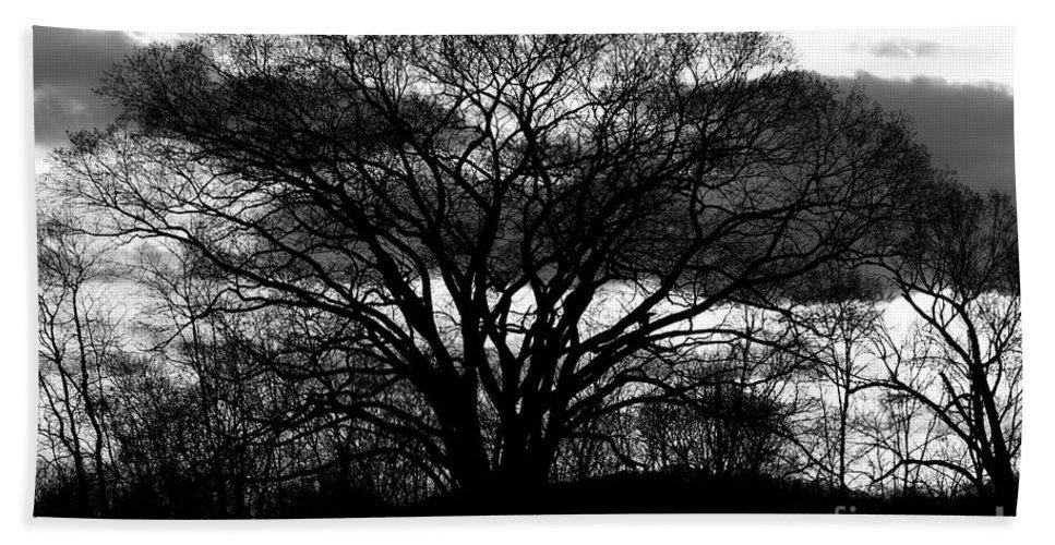 Tree Beach Towel featuring the photograph Tree by Douglas Stucky
