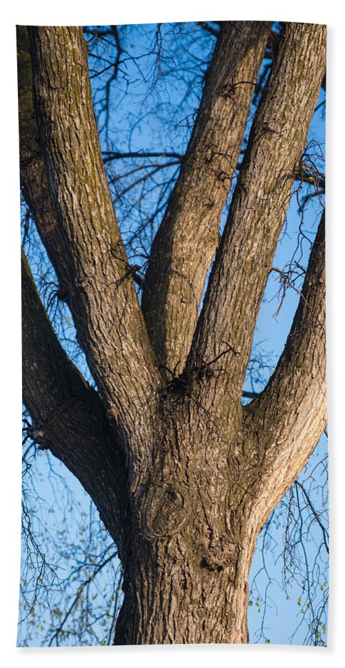 Tree Beach Towel featuring the photograph Tree Fork by Donald Erickson