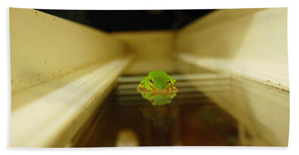 Frog Beach Towel featuring the photograph Tree Frog II by Robert Meanor