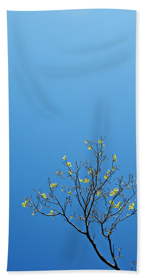 Tree Beach Towel featuring the photograph Tree In Spring by Scott Sawyer