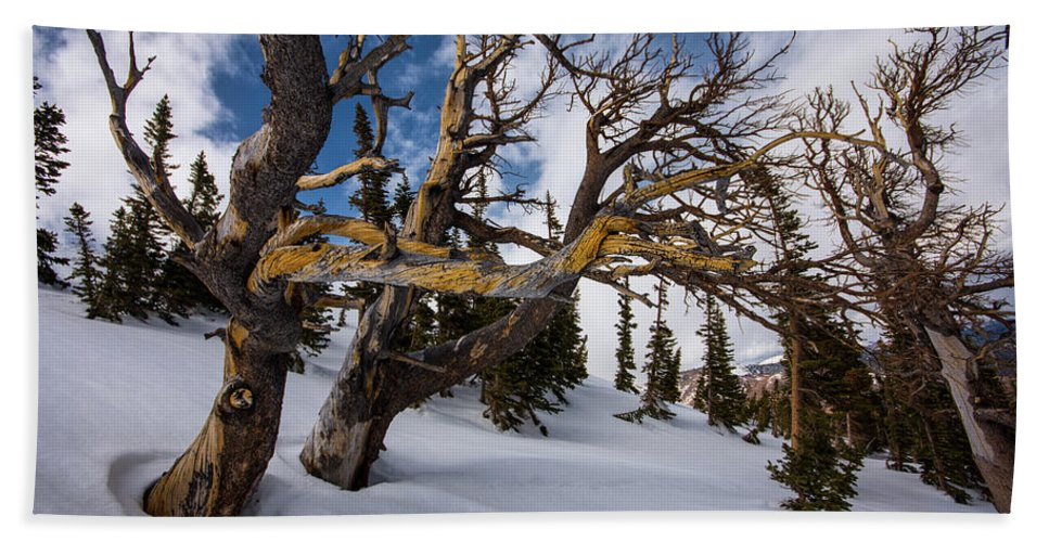 Landscape Beach Towel featuring the photograph Tree Life In Winter by Rob Lantz